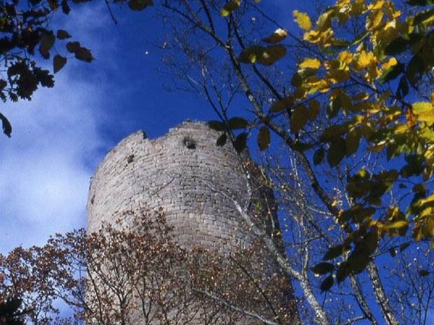 Mittelalterliche Burg mitten im Wald