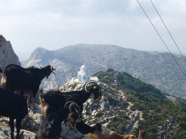 Ziegen sitzen auf den Gipfelspitzen in den Bergen. Im Hintergrund ist eine Kirche zusehen