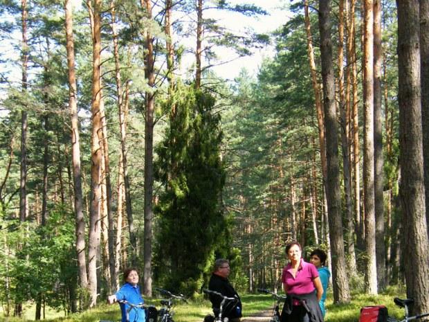 Kleine Pause auf dem Radweg im Wald
