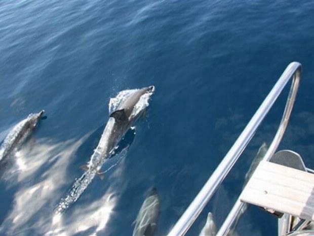Delfine beobachten von Deck der Yacht in Atlantik