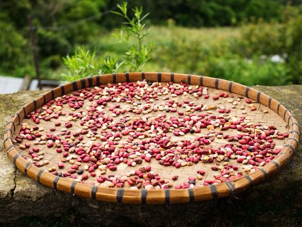 Früchte und Nüssen werden gesammelt