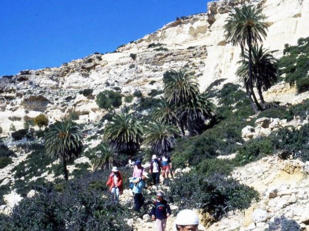 Wanderung zwischen Palmen und Bergen