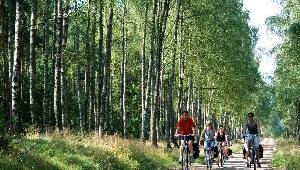 Fahrradfahrer radeln durch den Wald