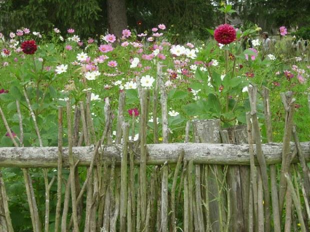 Wildblumen wachsen auf den vielen Wiesen am Rand der Strecke.